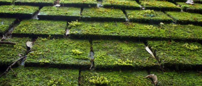 How to Safely Remove Algae and Moss Off of Your Roof