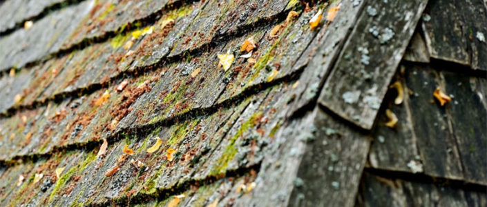 How To Prevent Moss and Algae Buildup On Your Roof