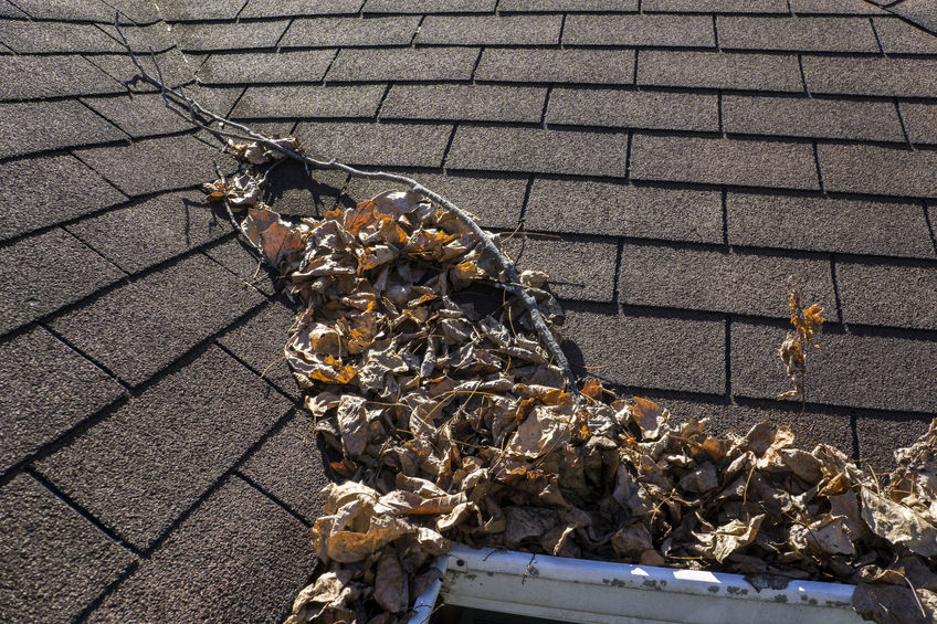 Getting Your Roof Ready and Prepared for the Fall Season